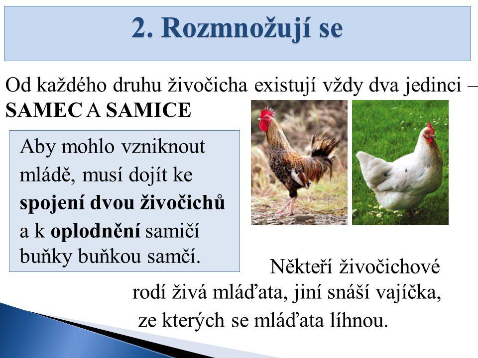 2. Rozmnožují se Od každého druhu živočicha existují vždy dva jedinci – SAMEC A SAMICE Aby mohlo vzniknout mládě, musí dojít ke spojení dvou živočichů