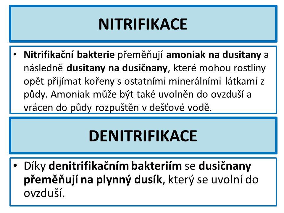 NITRIFIKACE Nitrifikační bakterie přeměňují amoniak na dusitany a následně dusitany na dusičnany, které mohou rostliny opět přijímat kořeny s ostatními minerálními látkami z půdy.