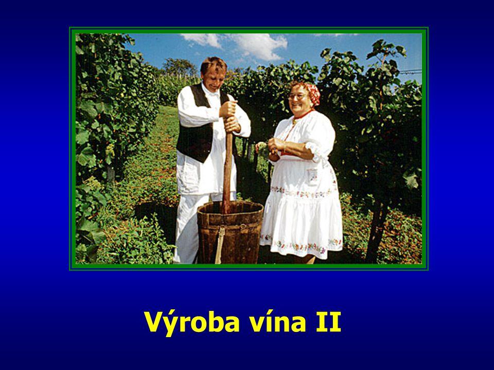 Výroba vína II