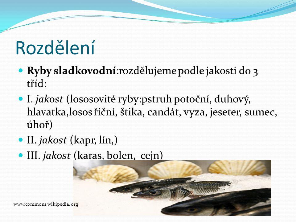 Rozdělení Ryby sladkovodní:rozdělujeme podle jakosti do 3 tříd: I. jakost (lososovité ryby:pstruh potoční, duhový, hlavatka,losos říční, štika, candát