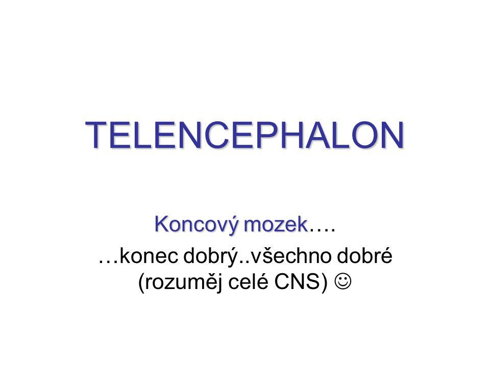 TELENCEPHALON Koncový mozek Koncový mozek…. …konec dobrý..všechno dobré (rozuměj celé CNS)