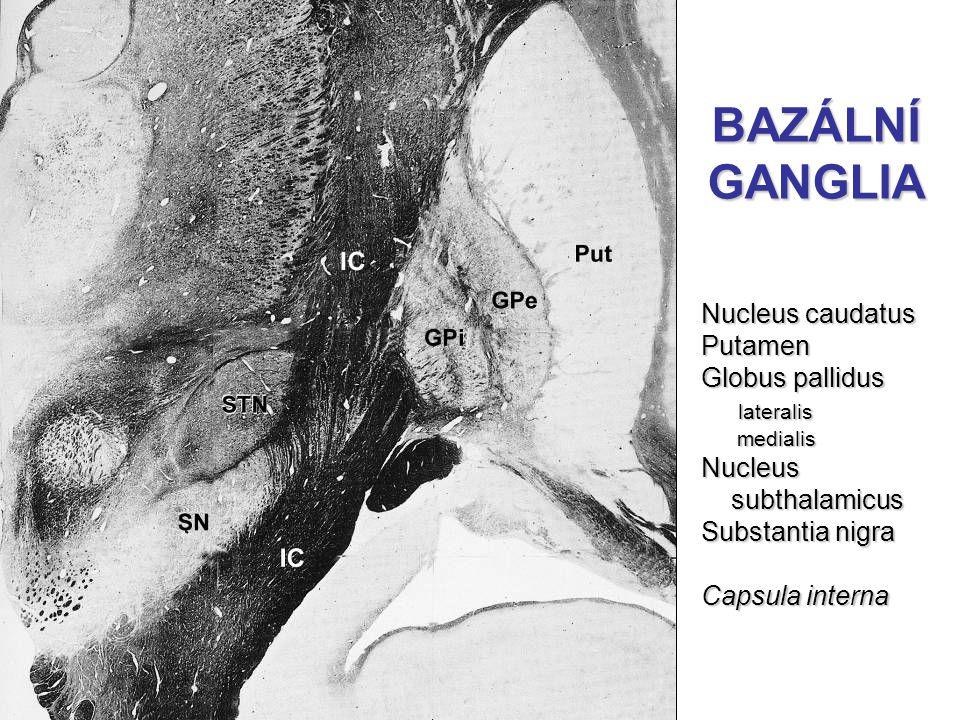 BAZÁLNÍ GANGLIA Nucleus caudatus Putamen Globus pallidus lateralis lateralis medialis medialisNucleus subthalamicus subthalamicus Substantia nigra Cap
