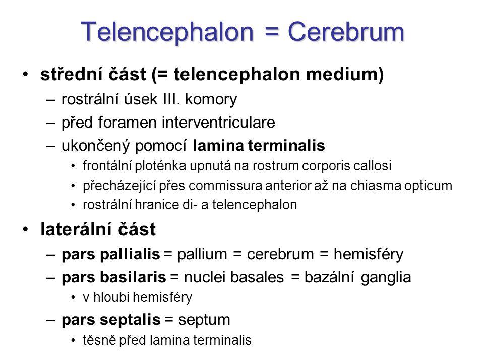 Telencephalon = Cerebrum střední část (= telencephalon medium) –rostrální úsek III. komory –před foramen interventriculare –ukončený pomocí lamina ter