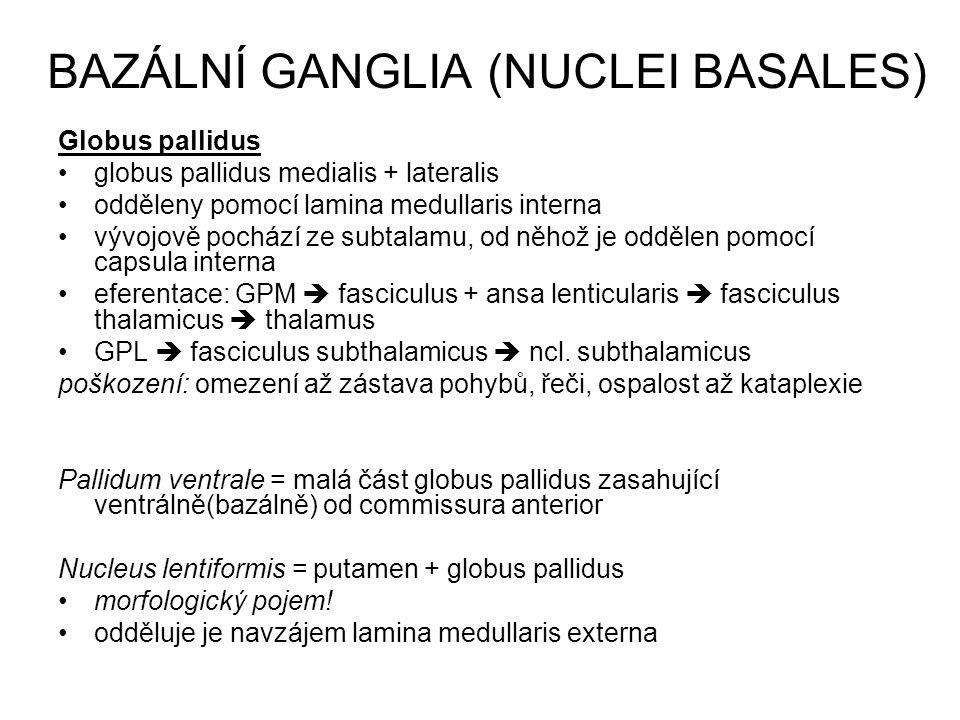 BAZÁLNÍ GANGLIA (NUCLEI BASALES) Globus pallidus globus pallidus medialis + lateralis odděleny pomocí lamina medullaris interna vývojově pochází ze su