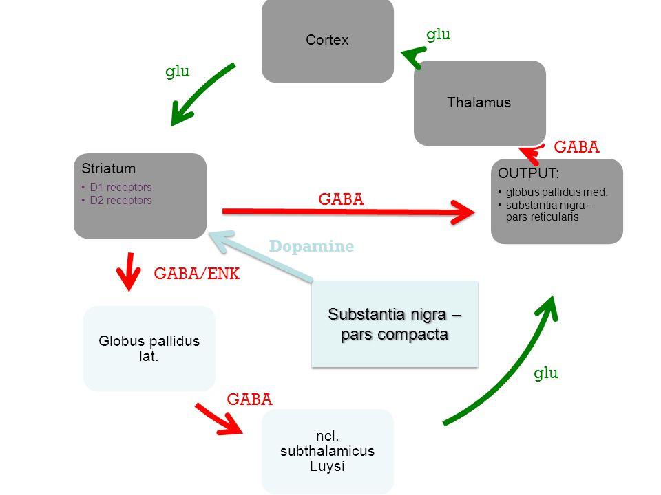 Cortex Striatum D1 receptors D2 receptors Globus pallidus lat. ncl. subthalamicus Luysi OUTPUT: globus pallidus med. substantia nigra – pars reticular