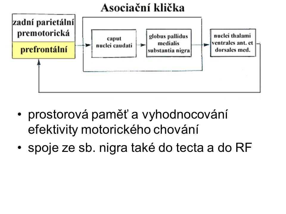 prostorová paměť a vyhodnocování efektivity motorického chování spoje ze sb. nigra také do tecta a do RF
