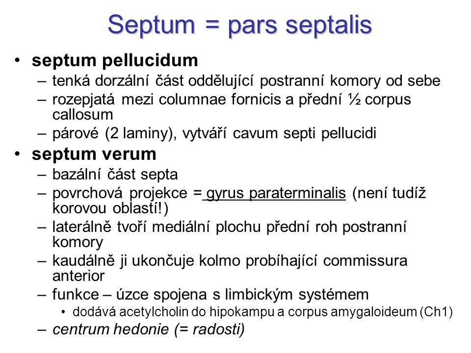 Septum = pars septalis septum pellucidum –tenká dorzální část oddělující postranní komory od sebe –rozepjatá mezi columnae fornicis a přední ½ corpus