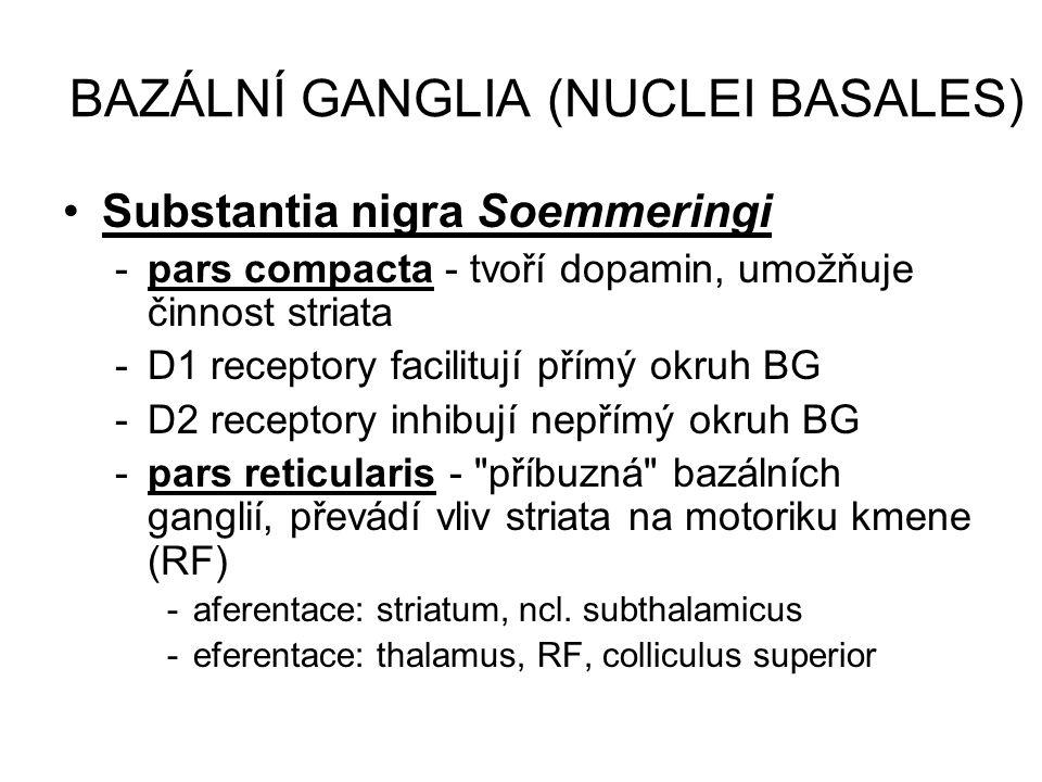 BAZÁLNÍ GANGLIA (NUCLEI BASALES) Substantia nigra Soemmeringi -pars compacta - tvoří dopamin, umožňuje činnost striata -D1 receptory facilitují přímý