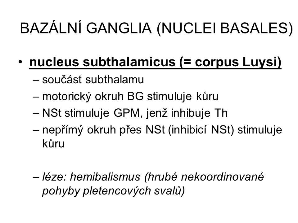 BAZÁLNÍ GANGLIA (NUCLEI BASALES) nucleus subthalamicus (= corpus Luysi) –součást subthalamu –motorický okruh BG stimuluje kůru –NSt stimuluje GPM, jen