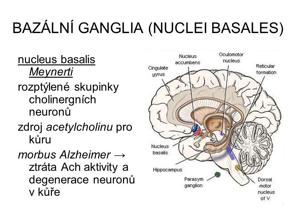 BAZÁLNÍ GANGLIA (NUCLEI BASALES) nucleus basalis Meynerti rozptýlené skupinky cholinergních neuronů zdroj acetylcholinu pro kůru morbus Alzheimer → zt