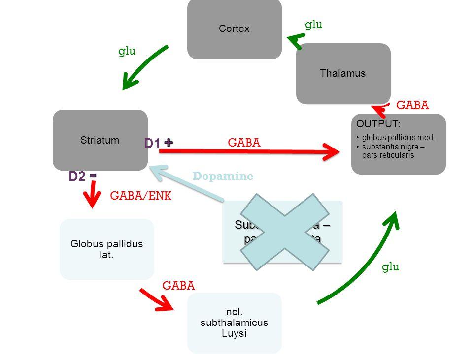 CortexStriatum Globus pallidus lat. ncl. subthalamicus Luysi OUTPUT: globus pallidus med. substantia nigra – pars reticularis Thalamus GABA/ENK glu GA