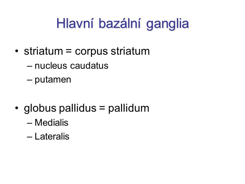 Hlavní bazální ganglia striatum = corpus striatum –nucleus caudatus –putamen globus pallidus = pallidum –Medialis –Lateralis