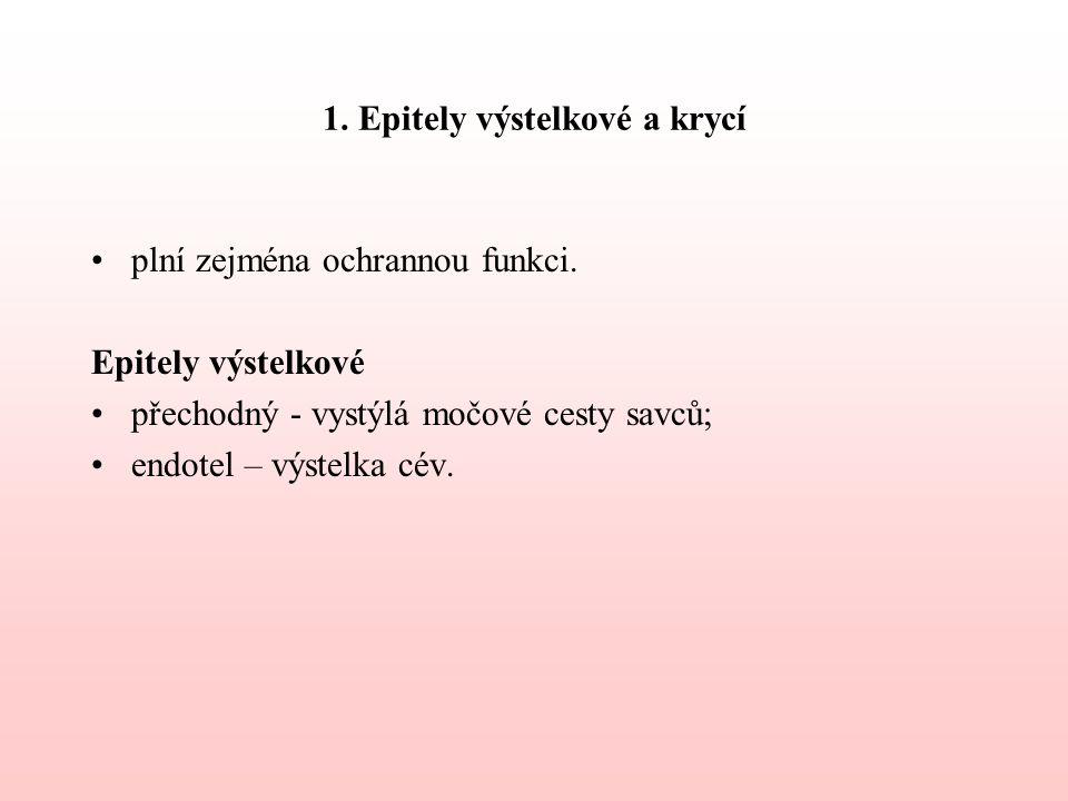 1.Epitely výstelkové a krycí plní zejména ochrannou funkci.