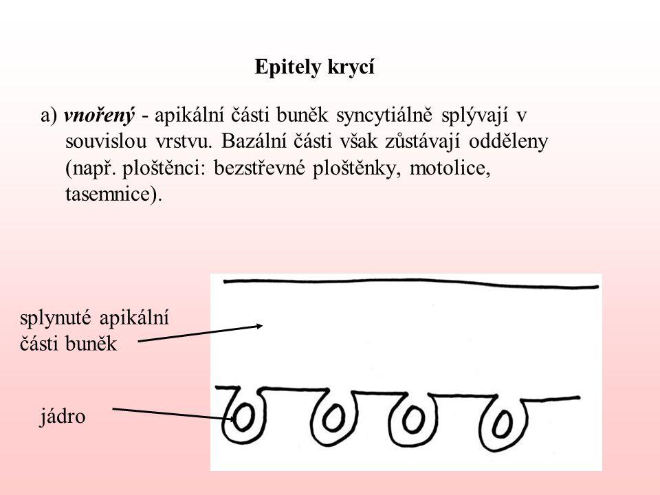 Epitely krycí a) vnořený - apikální části buněk syncytiálně splývají v souvislou vrstvu.