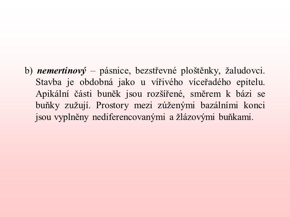 b) nemertinový – pásnice, bezstřevné ploštěnky, žaludovci.