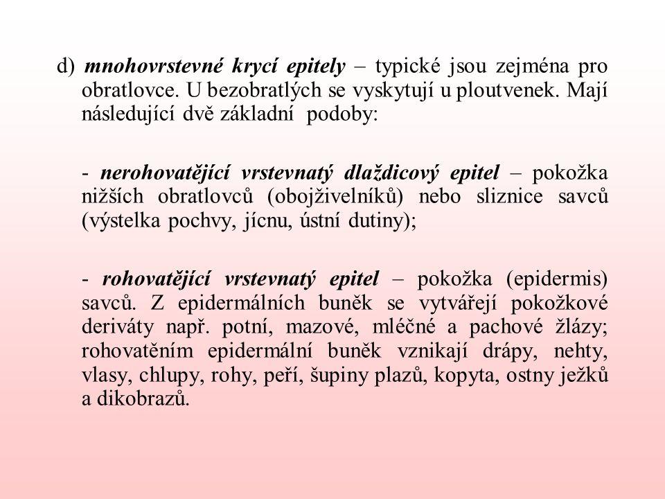 d) mnohovrstevné krycí epitely – typické jsou zejména pro obratlovce.