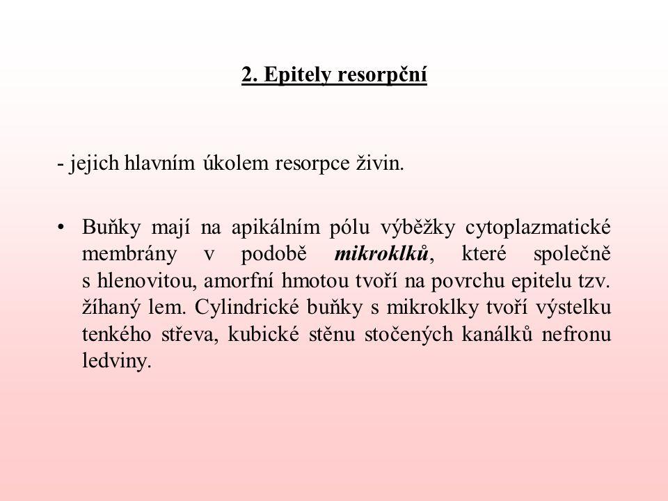 2.Epitely resorpční - jejich hlavním úkolem resorpce živin.