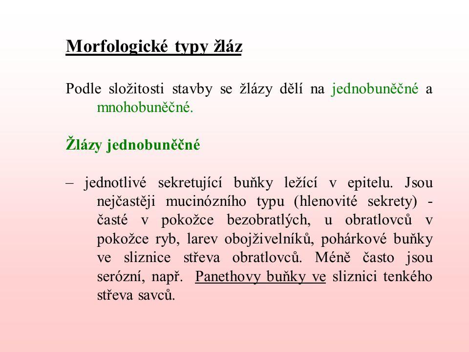 Morfologické typy žláz Podle složitosti stavby se žlázy dělí na jednobuněčné a mnohobuněčné.