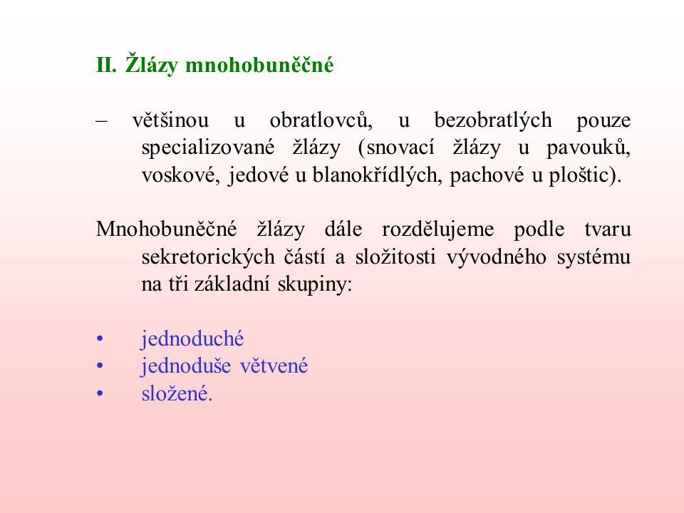 II. Žlázy mnohobuněčné – většinou u obratlovců, u bezobratlých pouze specializované žlázy (snovací žlázy u pavouků, voskové, jedové u blanokřídlých, p