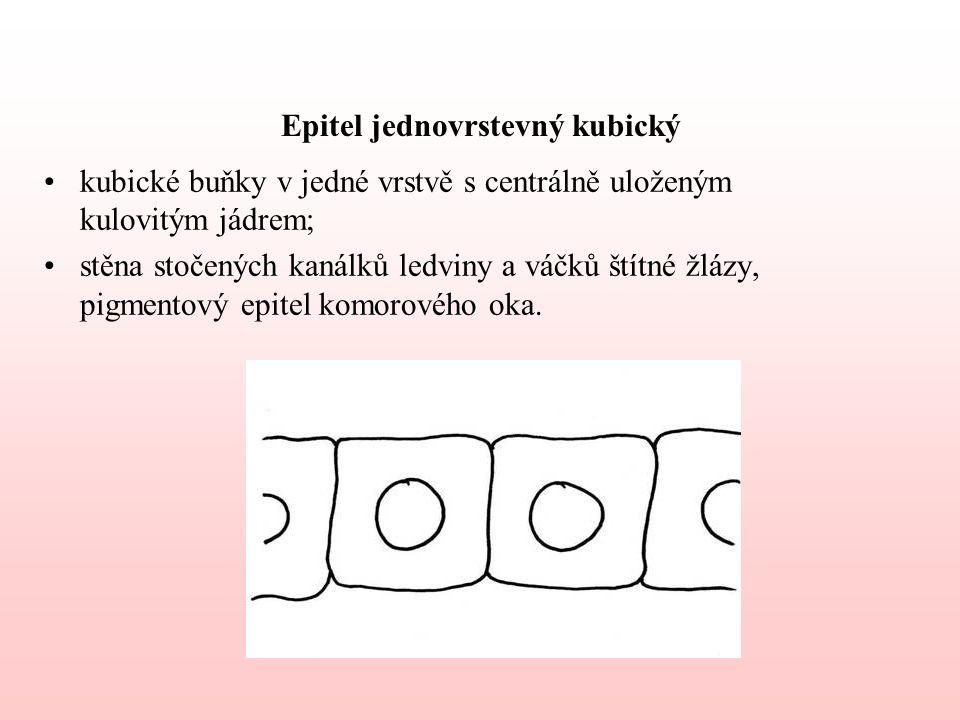 7.Epitely pigmentové mají vysoký obsah pigmentu; jsou uzpůsobeny absorpci světla; např.