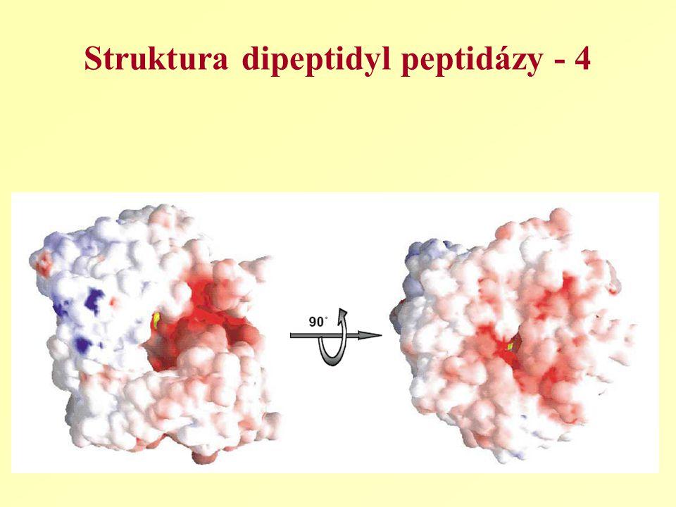 Struktura dipeptidyl peptidázy - 4