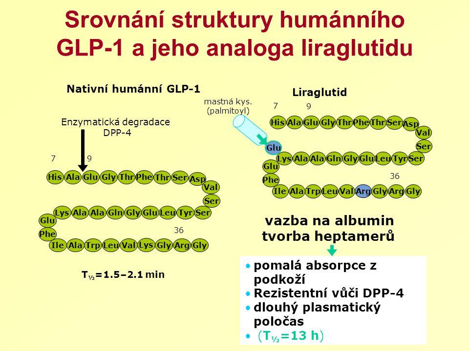 Srovnání struktury humánního GLP-1 a jeho analoga liraglutidu 7 36 9 Lys HisAlaThr Ser PheGluGly Asp Val Ser TyrLeuGluGlyAla GlnLys Phe Glu IleAlaTrp
