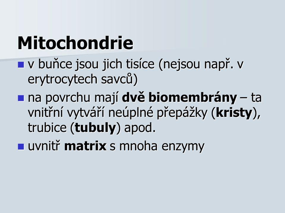 Mitochondrie v buňce jsou jich tisíce (nejsou např.