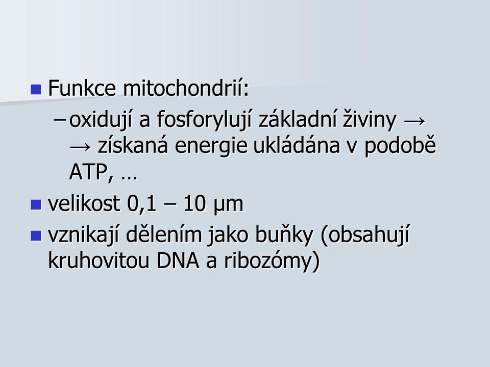 Funkce mitochondrií: Funkce mitochondrií: –oxidují a fosforylují základní živiny → → získaná energie ukládána v podobě ATP, … velikost 0,1 – 10 μm velikost 0,1 – 10 μm vznikají dělením jako buňky (obsahují kruhovitou DNA a ribozómy) vznikají dělením jako buňky (obsahují kruhovitou DNA a ribozómy)