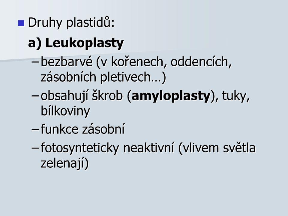 Druhy plastidů: Druhy plastidů: a) Leukoplasty –bezbarvé (v kořenech, oddencích, zásobních pletivech…) –obsahují škrob (amyloplasty), tuky, bílkoviny –funkce zásobní –fotosynteticky neaktivní (vlivem světla zelenají)