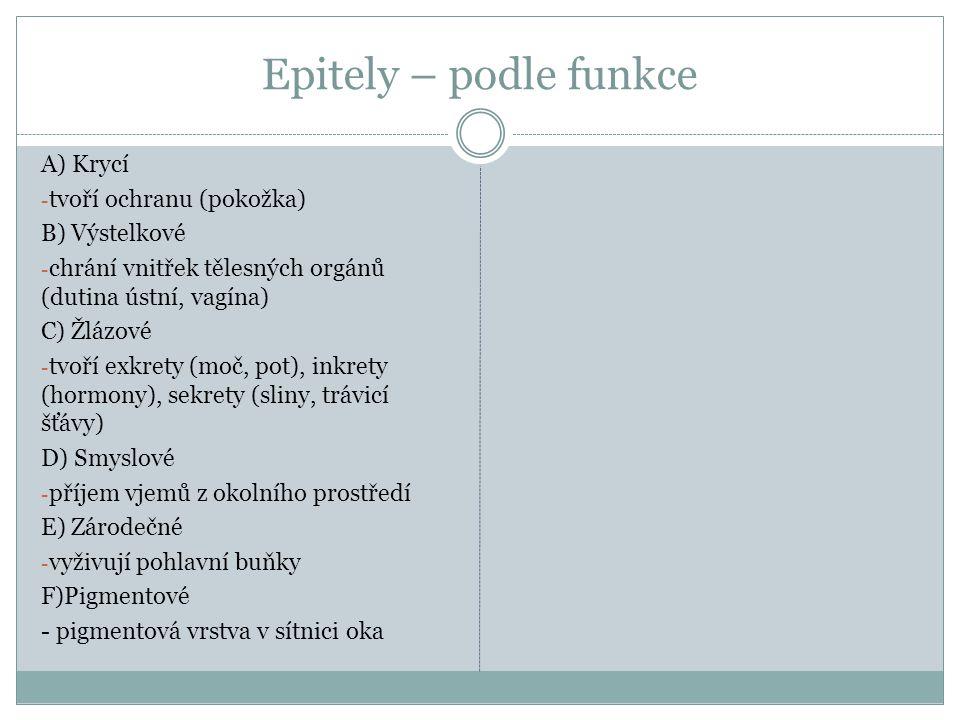 Epitely – podle funkce A) Krycí - tvoří ochranu (pokožka) B) Výstelkové - chrání vnitřek tělesných orgánů (dutina ústní, vagína) C) Žlázové - tvoří ex