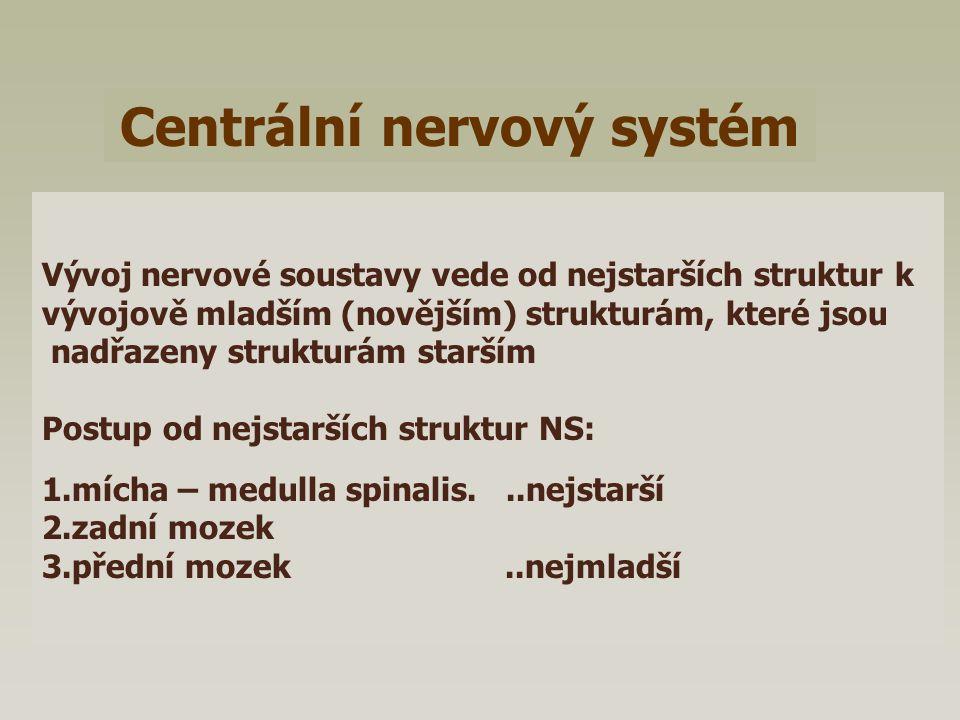 Centrální nervový systém Vývoj nervové soustavy vede od nejstarších struktur k vývojově mladším (novějším) strukturám, které jsou nadřazeny strukturám