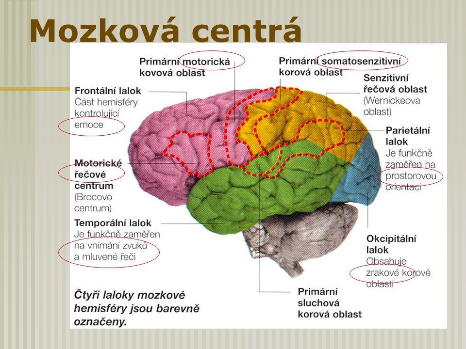 Mozková centrá