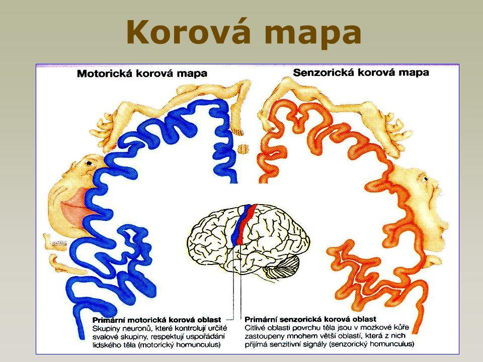 Korová mapa