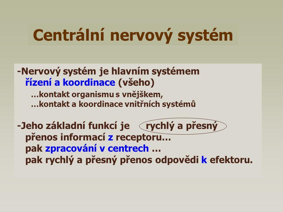 Vegetativní nervový systém Sympatickýparasympatický Sympatický a parasympatický Mediátorem sympatiku je Noradrenalin … proto adrenergní nervová vlákna Mediátorem parasymptatiku je Acetylcholin..