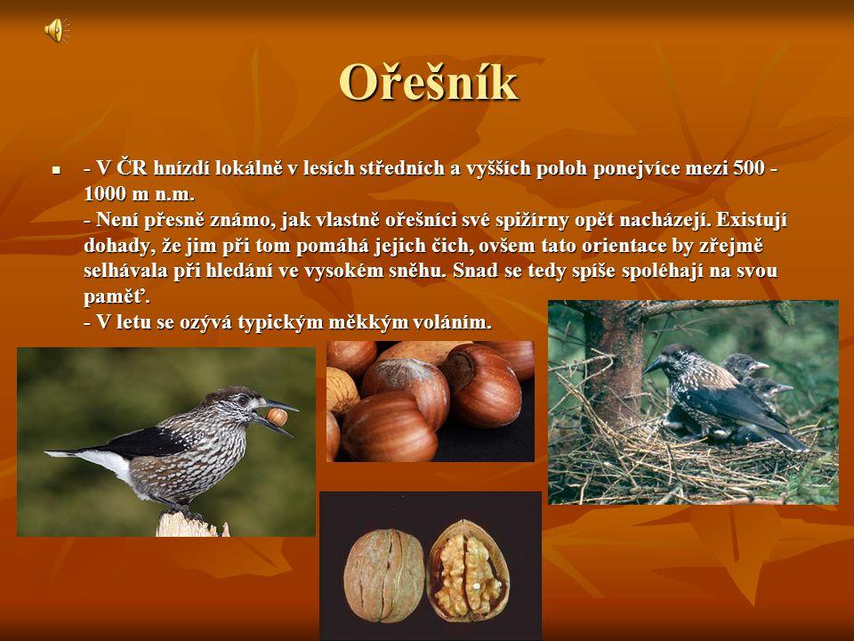 Ořešník - V ČR hnízdí lokálně v lesích středních a vyšších poloh ponejvíce mezi 500 - 1000 m n.m.