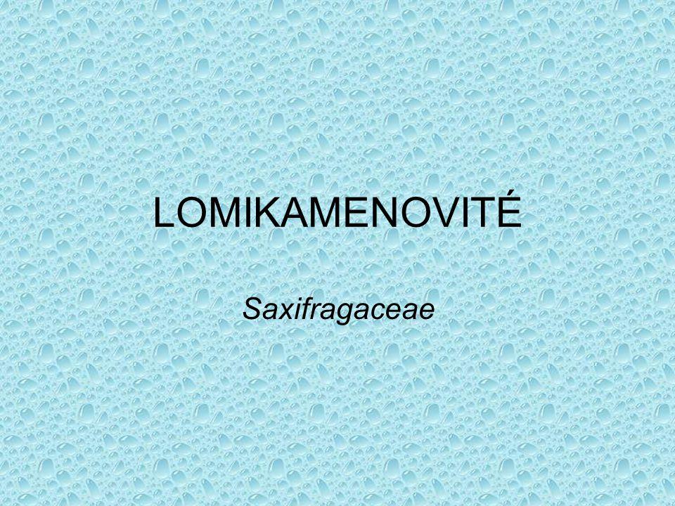 LOMIKAMENOVITÉ Saxifragaceae
