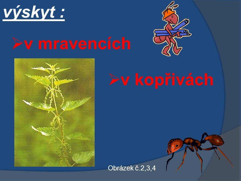 výskyt :  v mravencích  v kopřivách Obrázek č.2,3,4