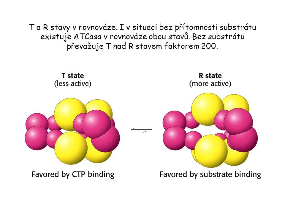 ATCasa vykazuje sigmoidní kinetiku.