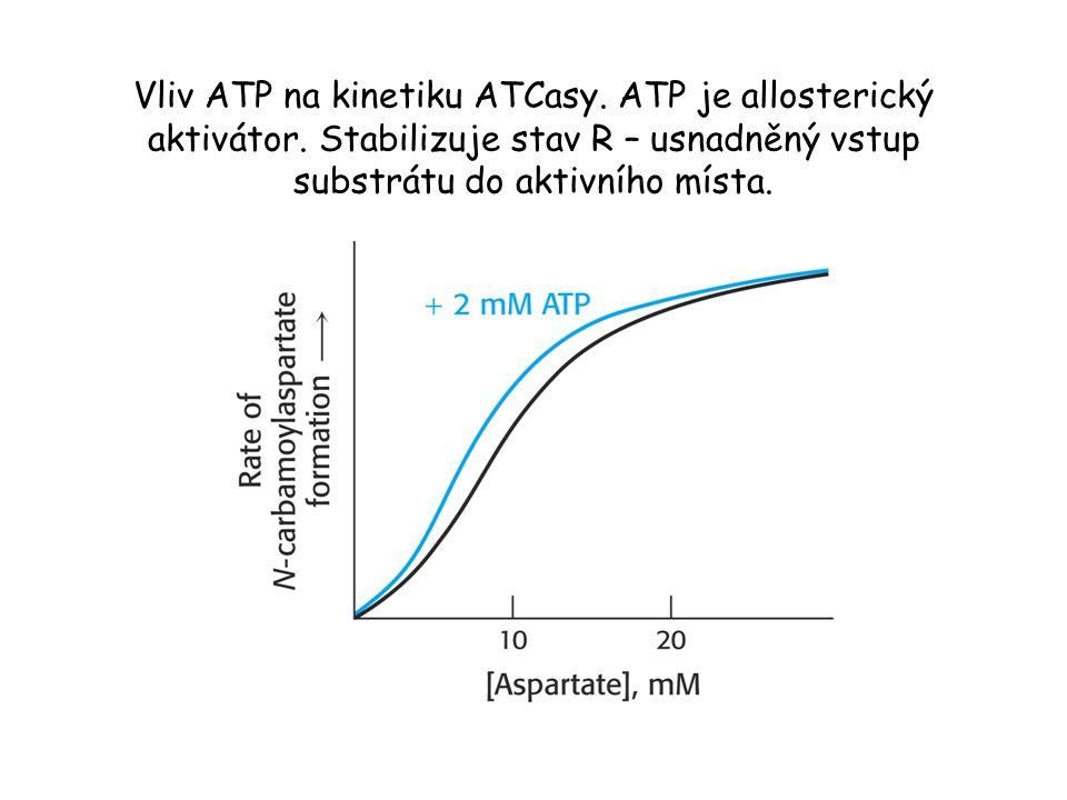 Vliv ATP na kinetiku ATCasy.ATP je allosterický aktivátor.