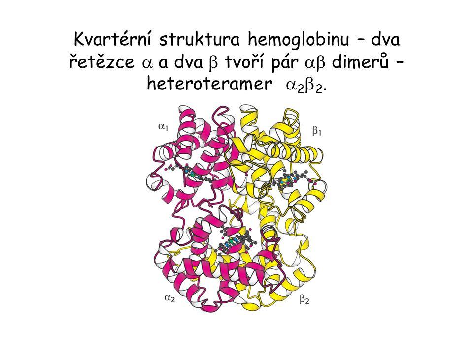 Kvartérní struktura hemoglobinu – dva řetězce  a dva  tvoří pár  dimerů – heteroteramer  2  2.