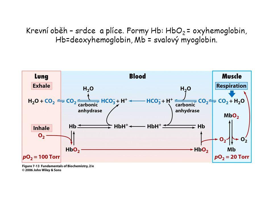 Krevní oběh – srdce a plíce. Formy Hb: HbO 2 = oxyhemoglobin, Hb=deoxyhemoglobin, Mb = svalový myoglobin.