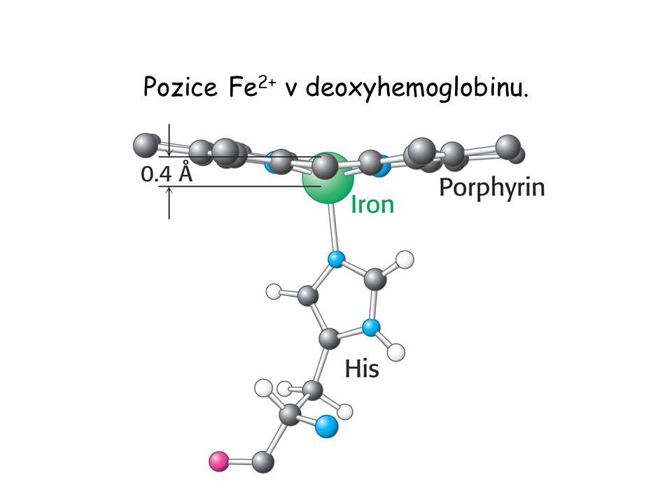 Pozice Fe 2+ v deoxyhemoglobinu.
