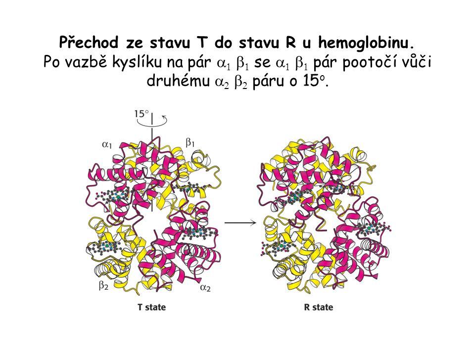 Přechod ze stavu T do stavu R u hemoglobinu.