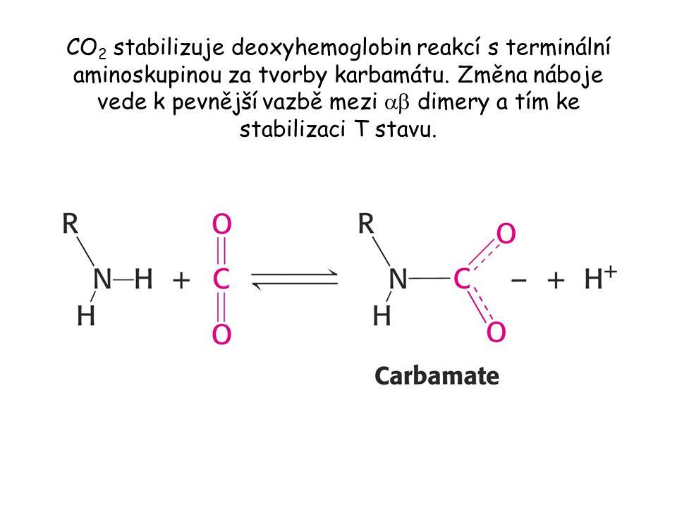 CO 2 stabilizuje deoxyhemoglobin reakcí s terminální aminoskupinou za tvorby karbamátu.
