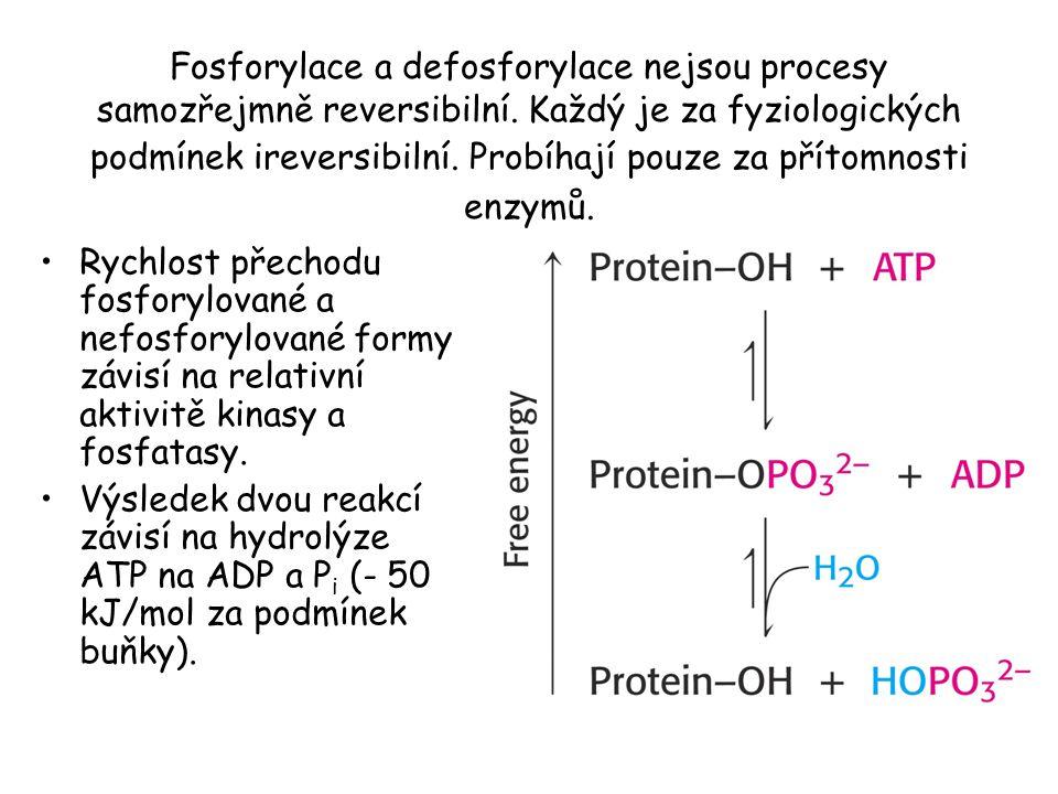 Fosforylace a defosforylace nejsou procesy samozřejmně reversibilní.