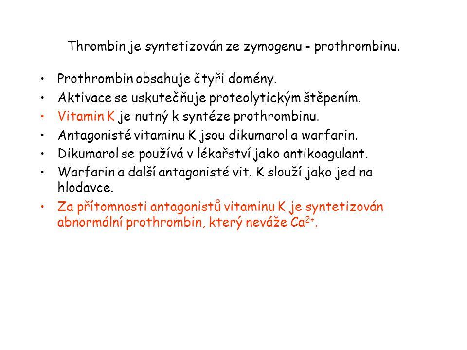 Thrombin je syntetizován ze zymogenu - prothrombinu.