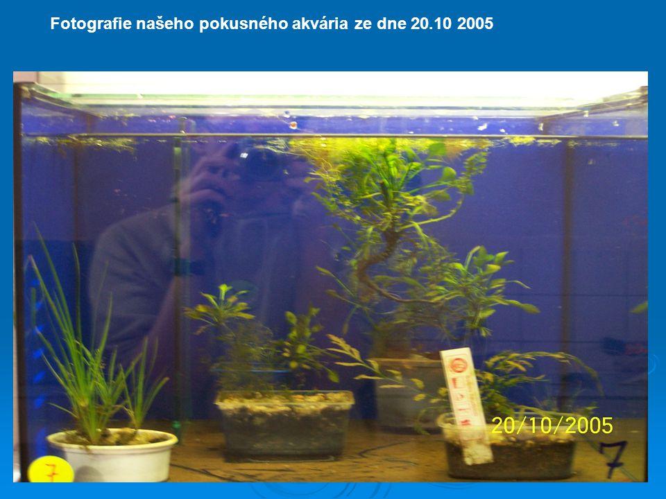 Fotografie našeho pokusného akvária ze dne 20.10 2005
