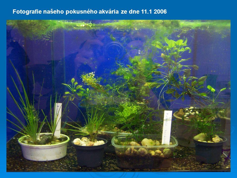 Fotografie našeho pokusného akvária ze dne 11.1 2006