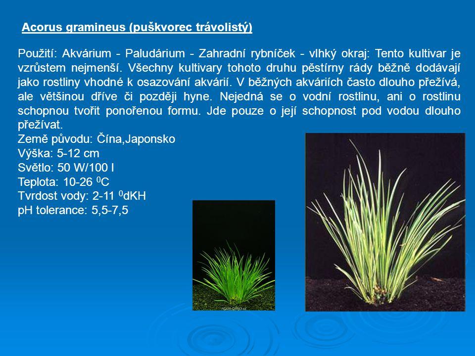 Použití: Akvárium - Paludárium - Zahradní rybníček - vlhký okraj: Tento kultivar je vzrůstem nejmenší. Všechny kultivary tohoto druhu pěstírny rády bě