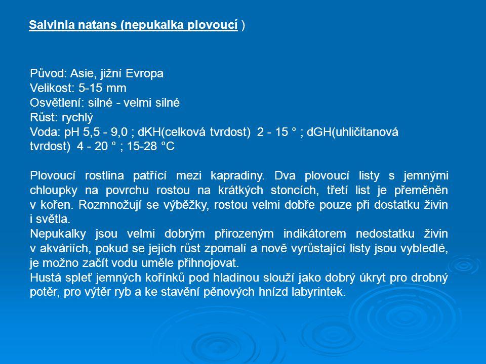 Salvinia natans (nepukalka plovoucí ) Původ: Asie, jižní Evropa Velikost: 5-15 mm Osvětlení: silné - velmi silné Růst: rychlý Voda: pH 5,5 - 9,0 ; dKH